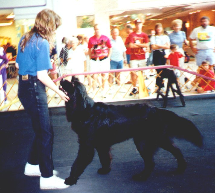 Jeanine S Professional Dog Training Upcoming Events Demos